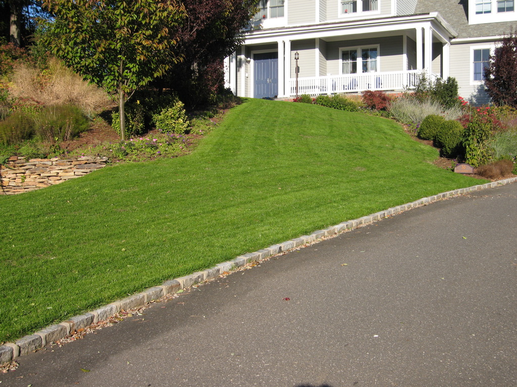 Jon\'s bluegrass front lawn 51 days after planting