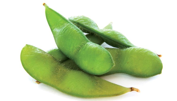 soybean-pods