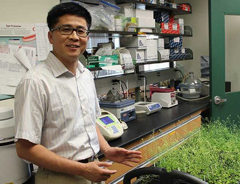 Huanzhong Wang, assistant professor of plant science and landscape architecture. (Kevin Noonan/UConn Photo)