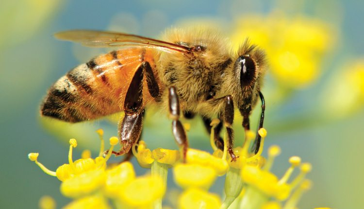 Changing agricultural practices have altered rural landscapes and natural habitats for many of the pollinators we need.