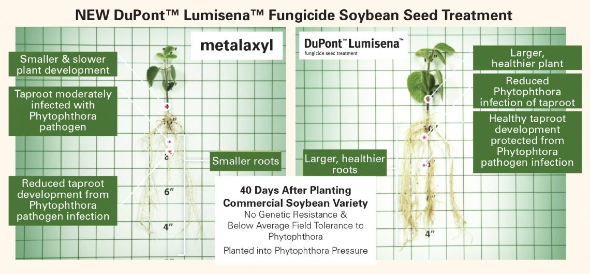 Lumisena soybean seed treatment trials.
