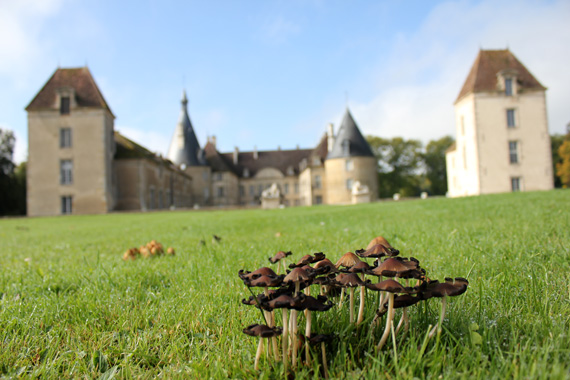 travel to a Burgundy chateau