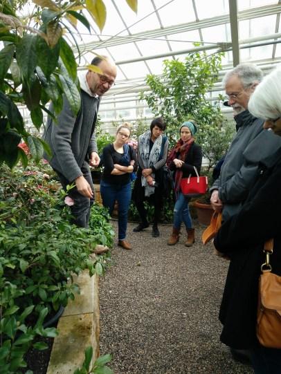 Inside the Camellia house. Photos: author.