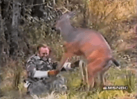 Deer-Attacks-Kills-Man-hunter-video