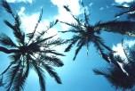 Junior - Hawaii Sky