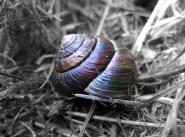 cf6a2-snail