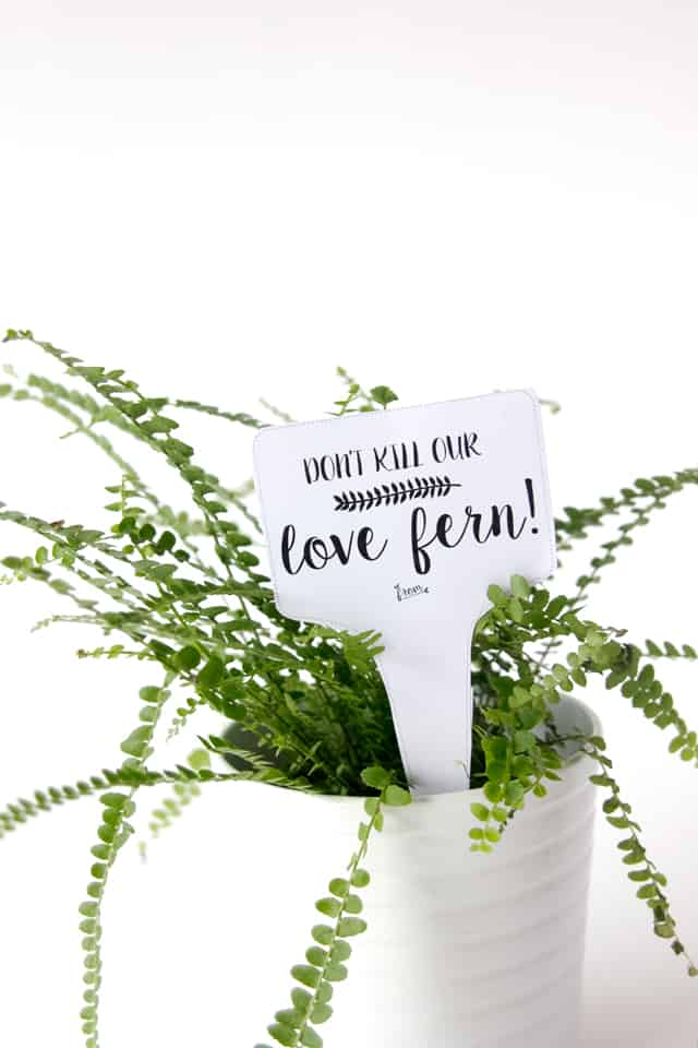 LOVE FERN Valentine Printables See Kate Sew