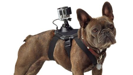 ht_gopro_fetch_harness_2_jc_140826_16x9_992