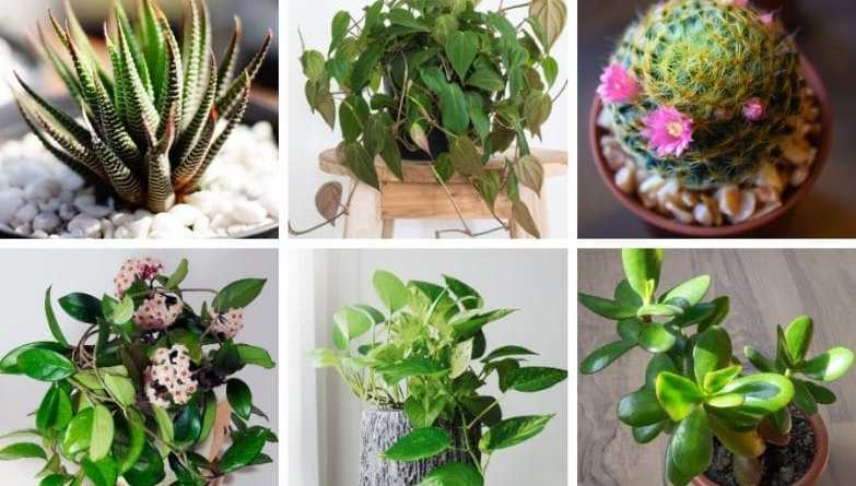 Which house plant can kill a human?