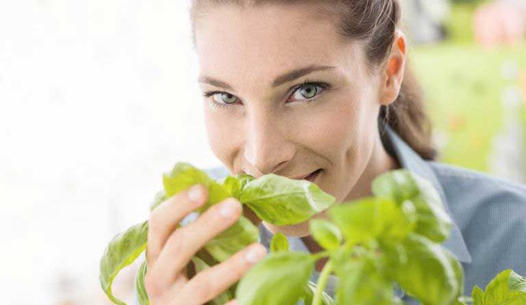 The incredible benefits of Basil