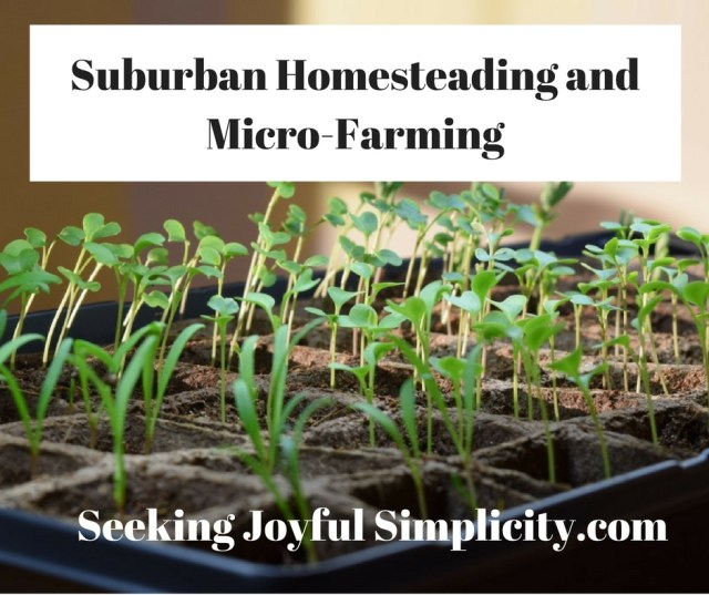 Many of us have decided to take an active role in providing food for our families, and not all of us have a lot of land or a lot of time to do it. Suburban homesteading is becoming increasingly popular and practical, despite the obvious challenges. Micro-farming is a way to enjoy the rewards and benefits of growing our food in small spaces. Amy Stross offers her excellent advice and guidance on over-coming the challenges of suburban homesteading with her book: The Suburban Micro-Farm, Modern Solutions for Busy People.