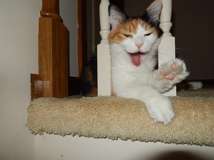 Cali, the calico cat