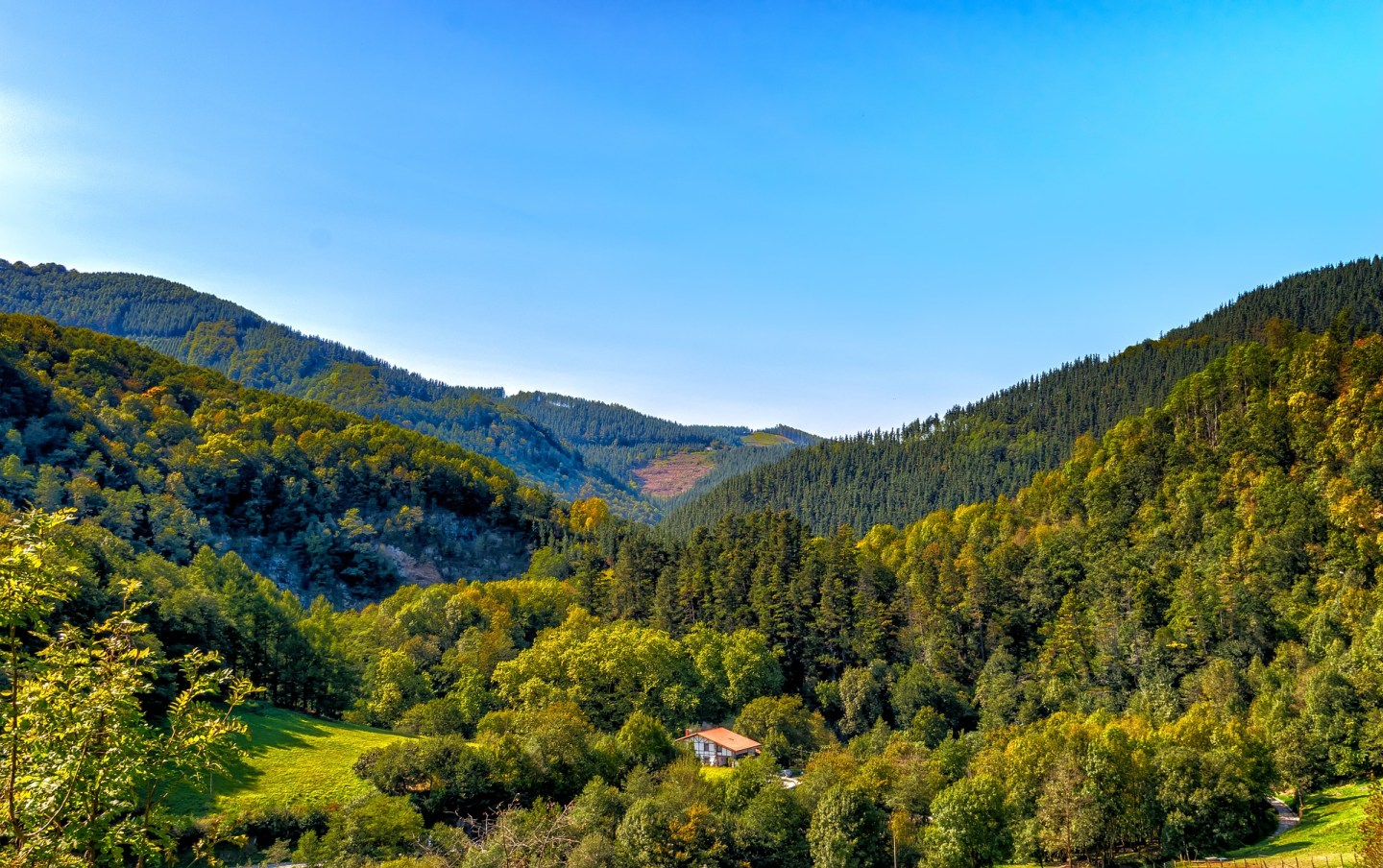 Lush green forests in Northern Spain
