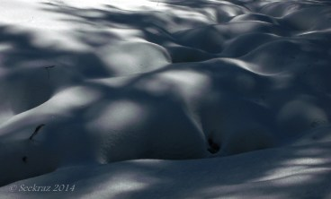 snowy shadows 5