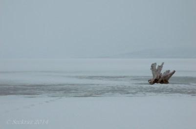 Antelope Island study in white 1