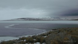 Antelope Island study in white 21