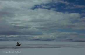 Antelope Island study in white 37