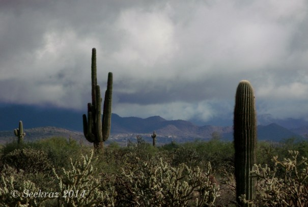 Cacti, clouds, and mountains