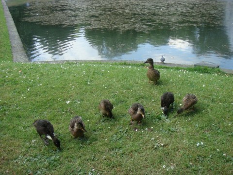 Oh, the duckies are just so cute.