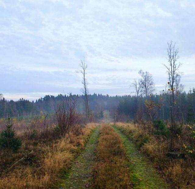 Waldweg in Schweden