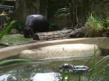 Mama-Hippo & Baby-Hippo