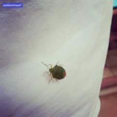 sssssssssssssssssssssss ... Beim Blumen gießen Besuch bekommtn von einem grünen Käfer.