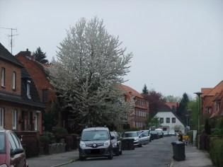 ein weißer Baum im Mai