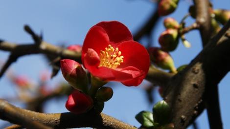 木瓜2.jpg