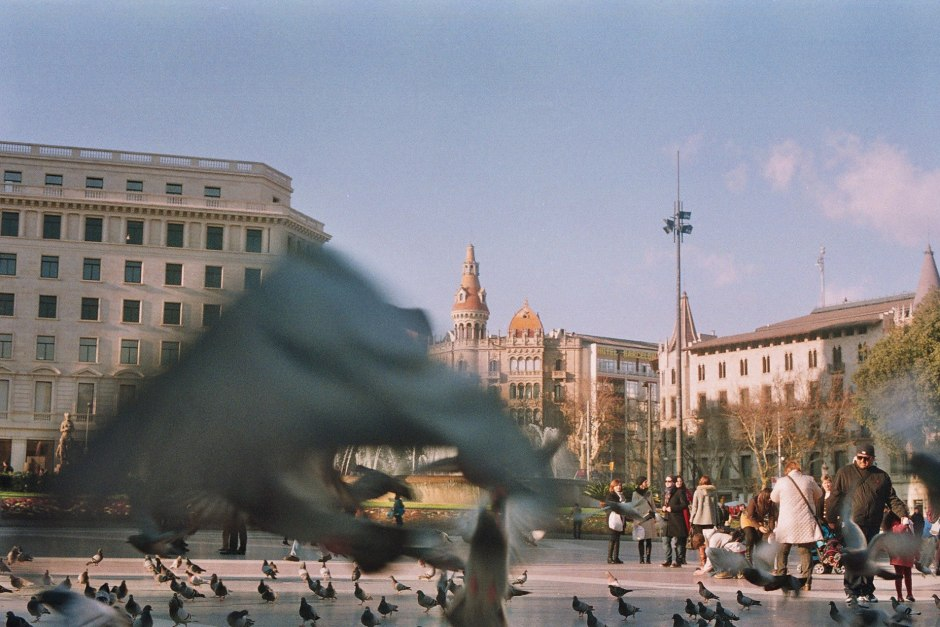 Birds fly in Plaza Cataluna