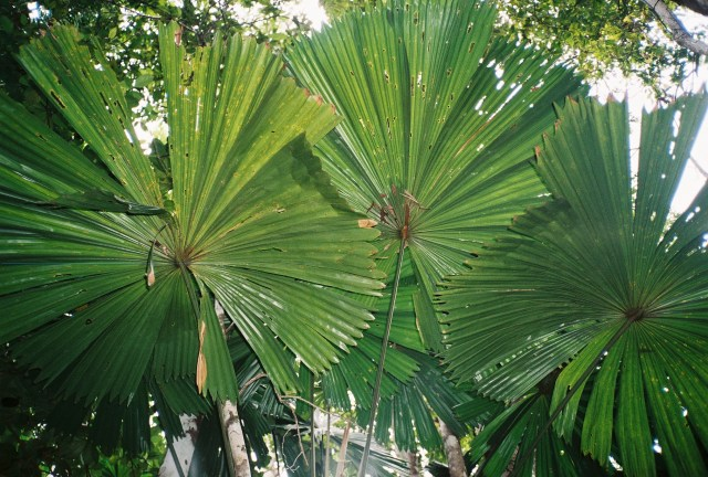 Impressive plants in the rainforest