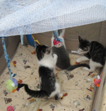 kittens-playing-in-crib