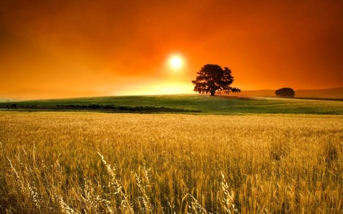 summer-sunny-days-beautiful-sunset-over-de-wheat-field_5120x3200