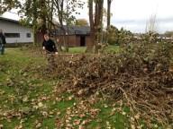 Der fældes træer - 2014-11-03