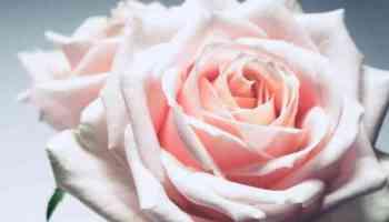 Random Fantasy Romance Title Generator - Sef Churchill