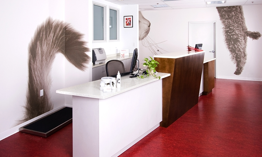 veterinary clinic interior design | Psoriasisguru.com