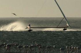 Die Flamingos staunen, als Sailrocket die 60 Knoten Marke durchbricht. © Sailrocket