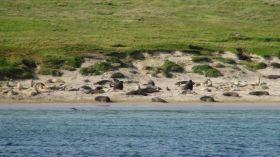 """Die Seelöwen sind Zeuge. """"Cheminées Poujoulat"""" vor den Auckland Islands"""