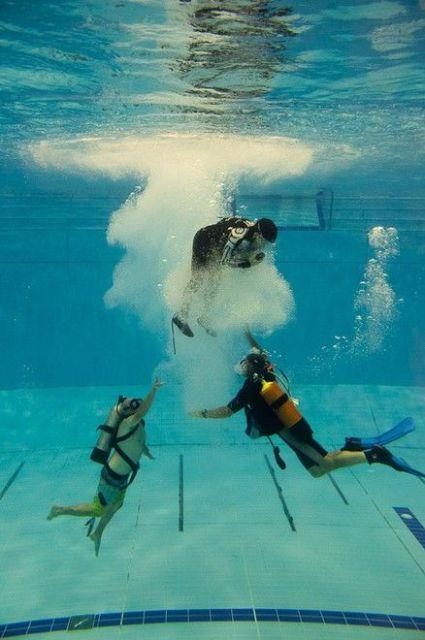 ETNZ im Schwimmbad