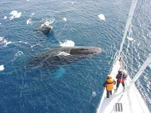 Die Spirit of Sidney wird auch für Film-Expeditonen in die Antarktis eingesetzt © wickens