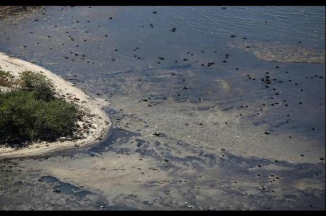 Lecker: ein ganz normaler Strandabschnitt an der Bucht. Und, nein, dies sind keine Algen, die dort treiben © Secretaria de Estado do Ambiente do Rio