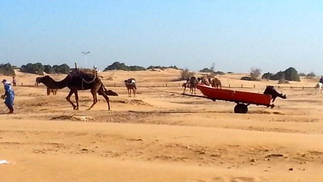 Dromedar, Wüste, Boot