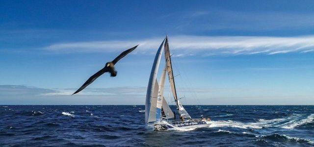 Albatross, Volvo Ocean Race