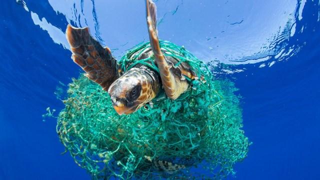 Plastik, Müll, Umweltschmutz