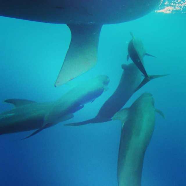 Langfahrt, Video, Wale