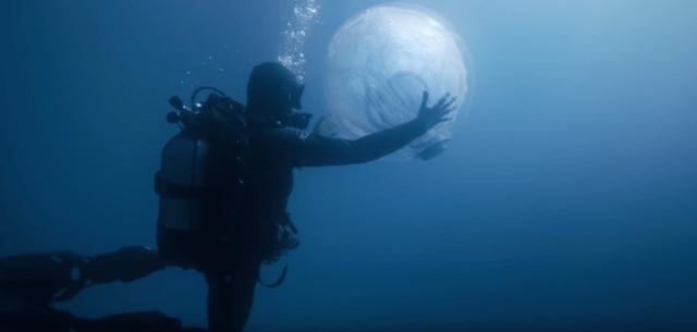Umwelt, Delfine, Wale, Sea Shepherd