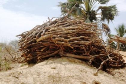 La déforestation et ses conséquences en milieu rural (4/4)