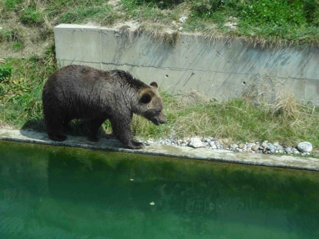 Urso em Berna
