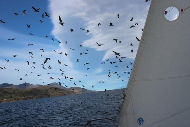 Dezenas de passos sobrevoando o barco em Ushuaia