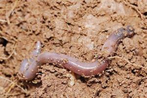 paura dei vermi - paura-dei-vermi