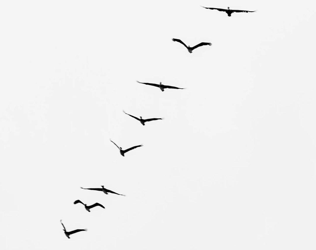 Libertà fronte e retro se guardo il mondo da un oblog